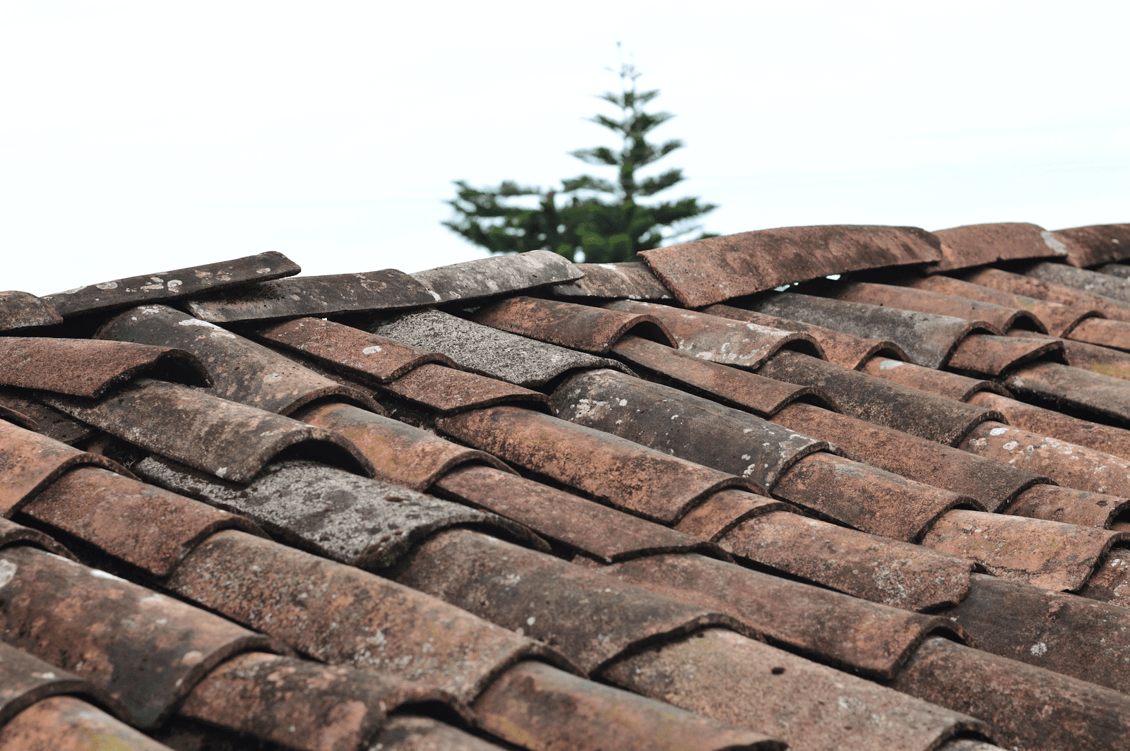 tile roofing maintenance